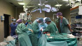 transplantace, IKEM