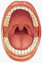 Dutina ústní