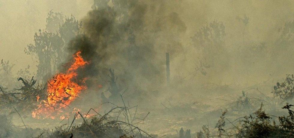 Mohutné loňské lesní požáry v Indonésii propukly kvůli vypalování pralesů pro nové území na plantáže.
