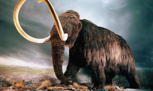 replika mamuta, ilustrační foto
