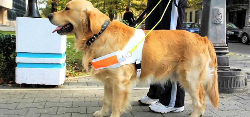 *handicap, slepota, asistenční pes