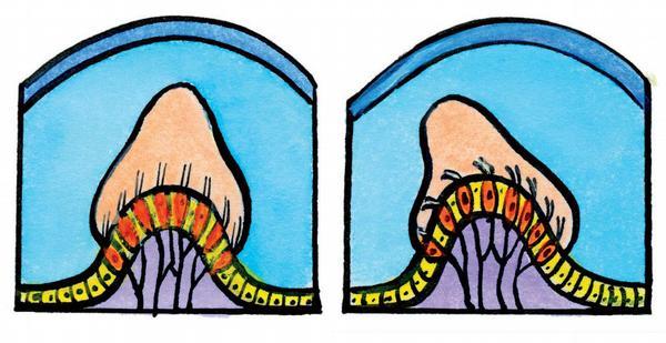 Ušní alveoly v klidu a při pohybu