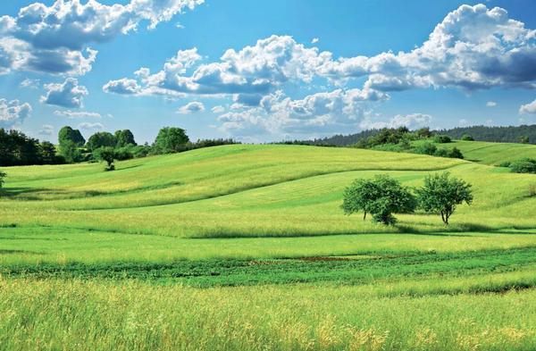 Celoroční a sezonní alergická rýma