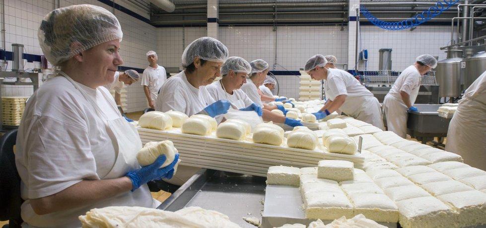 Výrobna sýru akawi v modernizovaném závodě Madety v Plané nad Lužnicí.