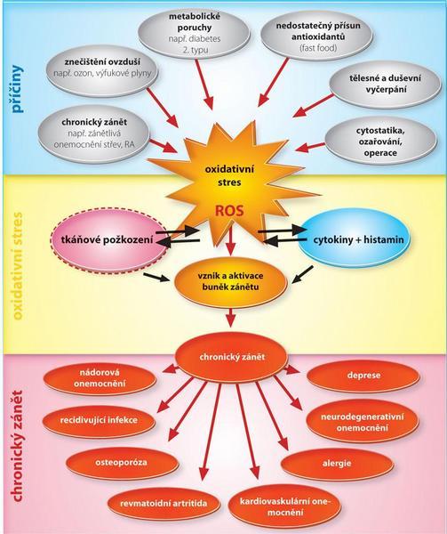 Obr. 1 Oxidativní stres vyvolává chronické záněty. Exogenně a endogenně vyvolaný oxidativní stres je významnou hnací silou chronických zánětů a tím i klíčovým faktorem v etiologii a patofyziologii řady onemocnění. (ROS = reactive oxygen species neboli reaktivní sloučeniny kyslíku.)