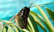 Motýl, ilustrační foto