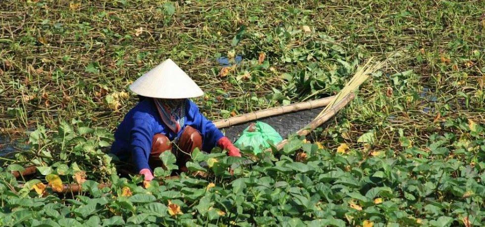 Vietnam (Zdroj: Mladá fronta)