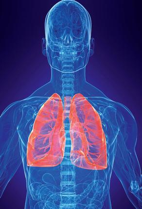 Rok plic 2010 p roběhne na celém světě