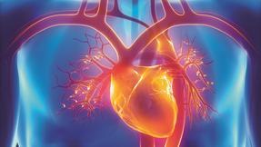 *kardiologie, srdce