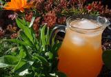Broskvový / Meruňkový sirup