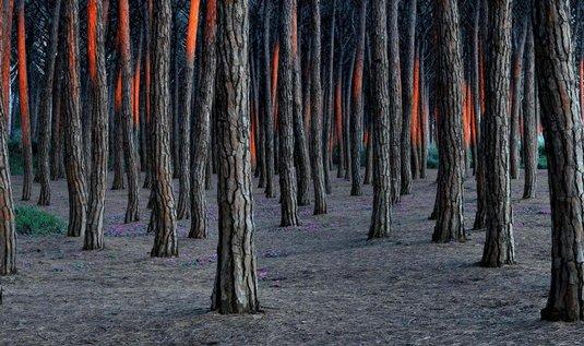 Nejlepší přírodní snímky – hořící borovicový les