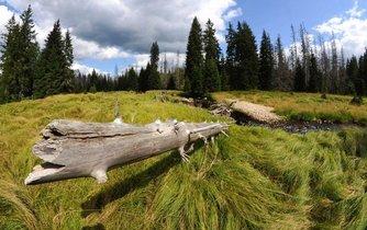 Šumava - ilustrační foto