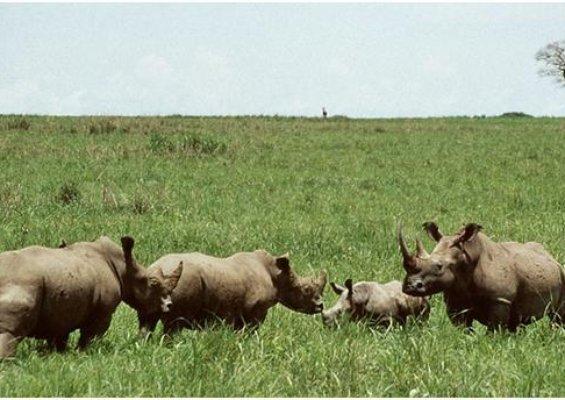 Narozený znovu seznamky v Keni