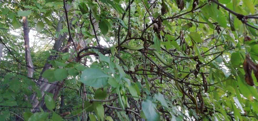 Mamba zelená byla odchycena v Hlubočepích. Po útěku se odplazila stovky metrů