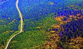 České lesy bez smrků a bez miliard, ilustrační foto