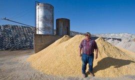 Sójové boby spolu s kukuřicí představují nejdůležitější položku americké zemědělského vývozu