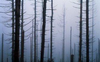 Snímek z roku 1990 zachycuje les v Krkonoších zničený kyselými dešti