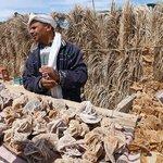 Ze Sahary se domů vozí berberská keramika, výrobky z velbloudí kůže či berberské šperky, nejlepší jsou ale místní datle.