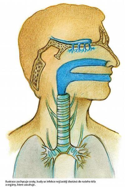 Ilustrace zachycuje cesty, kudy se infekce nejčastěji dostává do našeho těla a orgány, ktere zasahuje.