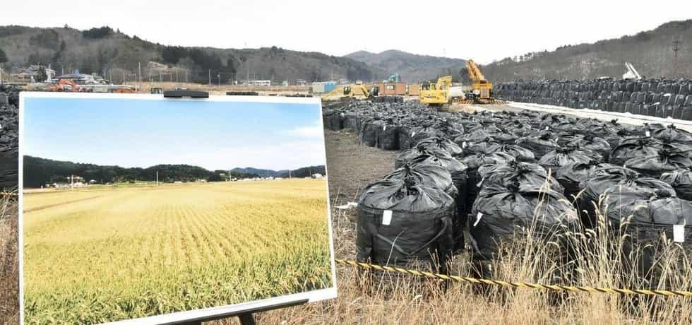 Pytle s kontaminovaným odpadem ve vesnici Iitate v prefektuře Fukušima v roce 2015. Před havárií byla oblast známá pro produkci rýže.