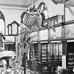 Počátek nepřátelství. Hadrosaurus byl prvním dinosaurem nalezeným v Americe. Cope v místě jeho nálezu – jistém slínovcovém dole v New Jersey – pátral po dalších dinosauřích kostech, jenže Marsh podplatil správce dolu, aby nálezy hlásil jemu.