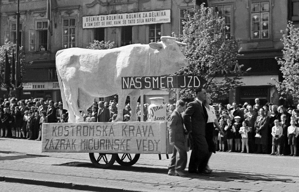 Kupředu, soudruzi. Vyvlastňování zemědělské výroby a její spojování do stranou ovládaných družstevních a státních podniků od roku 1948 probíhalo za velkého nadšení. Hlavně těch, kteří žádné zemědělství neprovozovali.