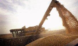 Sklizeň Bt-kukuřice, ilustrační foto
