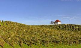 Slovinské vinařství Zlati Grič