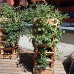 Lze na nich pěstovat květiny i zeleninu