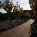 """Z původních 500 stromů přežilo """"betonový zábal"""" jen 170."""