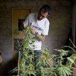 Uruguay schválila úplnou legalizaci marihuany jako první stát na světě. Nyní se čeká již jen na podpis  prezidenta (10. prosince 2013)