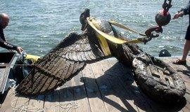 Nabízí se říšská orlice. Uruguay musí prodat vylovený nacistický symbol