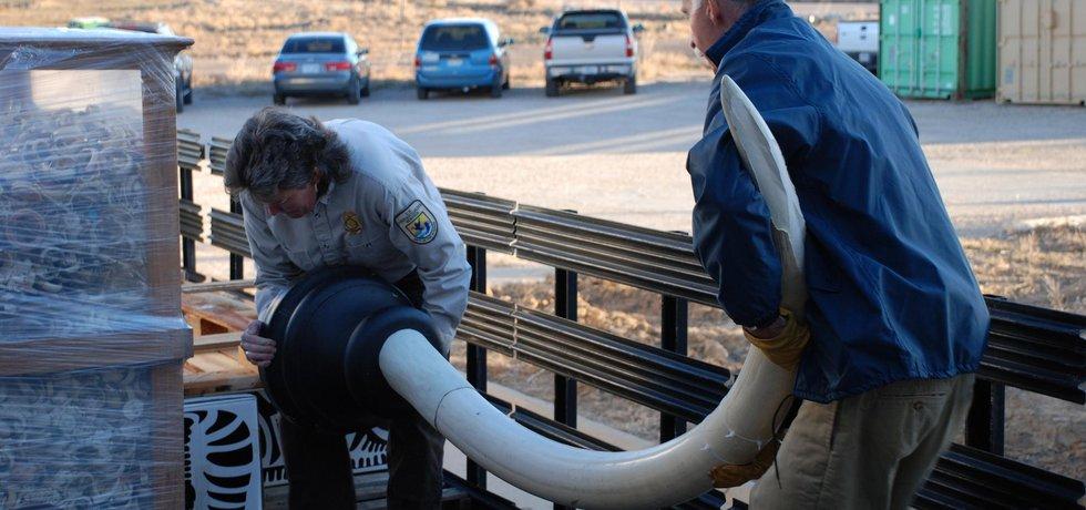 Sloní kly zabavené úřady, ilustrační foto