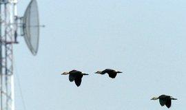 Elektromagnetické záření z vysílačů mate orientační smysl ptáků