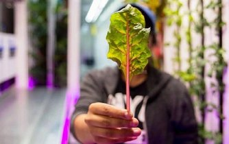 Vertikální farma Square Roots
