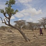 Oblast západní Turkany v africké Keni většinu roku trápí obrovské sucho.