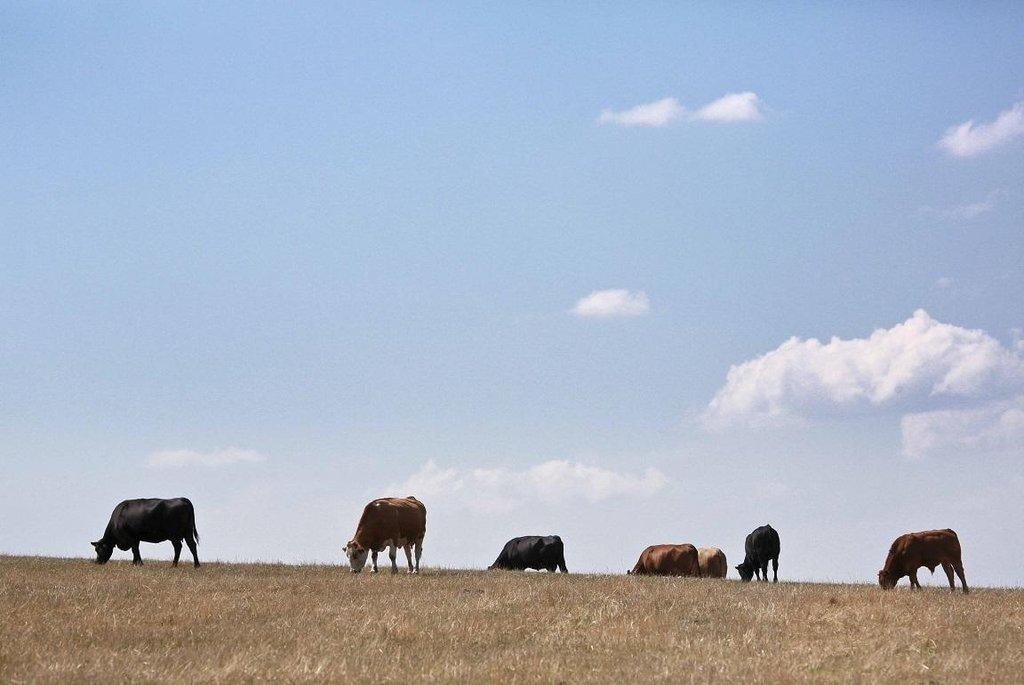 Klimatické změny promění zemědělství a produkci potravin. Dotkne se to hlavně masité stravy.