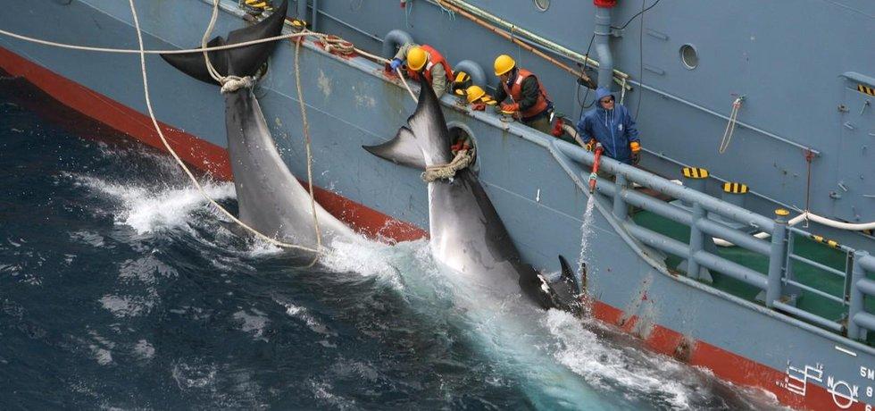 lov velryb (ilustrační foto)