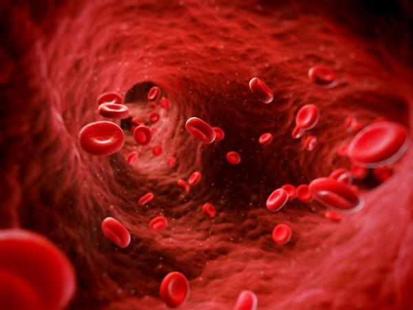 krev, céva