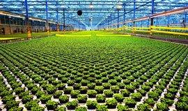 Lupení za čtvrt miliardy. Výrobními linkami firmy Bylinky ročně projde pět milionů květináčů