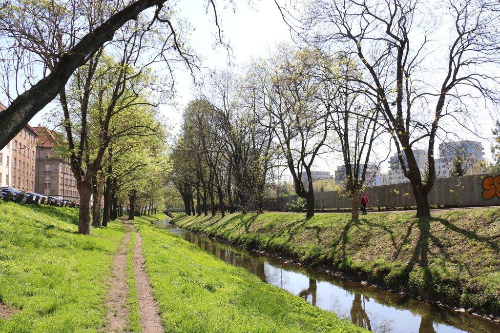 Okolí potoka Rokytky