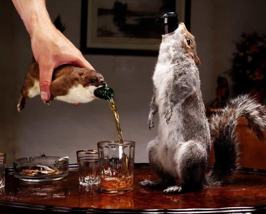 Svého času nejsilnější pivo světa s 55 procenty objemu alkoholu. End of History skotského pivovaru Beer Dog s vypreparovanou veverkou, která přirozeně uhynula.