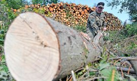 Bundeswehr v Sasku vyrazil do boje proti kůrovci, ilustrační foto