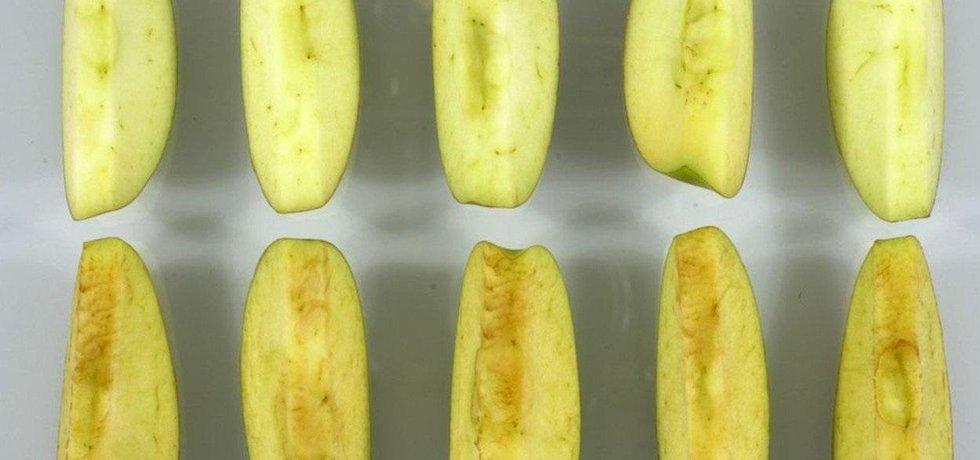 Geneticky upravené kousky jablka nahoře. Běžné jablko dole.