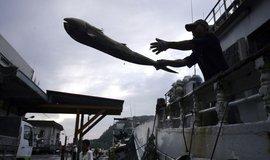 Rybolov patří mezi hlavní příčiny poškozování ekosystémů