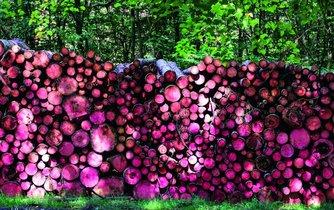 Dřevo, ilustrační foto