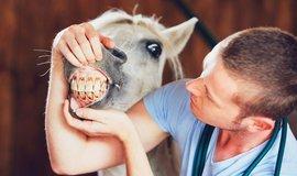 Koňská dávka na klouby, ilustrační foto