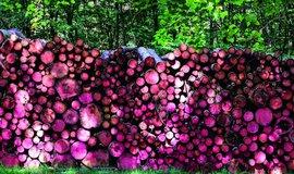Krize na trhu s lesními pozemky: i špatná cena by dnes byla špičková