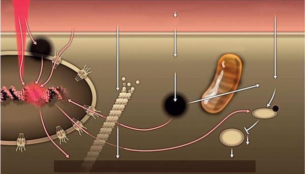 Vysokodávkovaný parenterálně podávaný askorbát zvyšuje chemosenzitivitu karcinomu ovaria a redukuje toxicitu chemoterapie