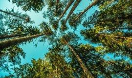 Stromy - ilustrační foto